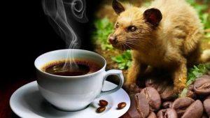 Những loại cà phê độc, lạ trên thế giới có thể bạn chưa biết đến 2